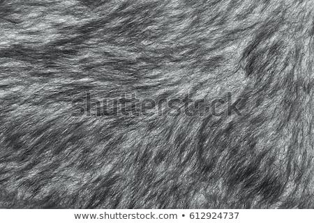 brown shaggy skin of an animal closeup texture, Fur Texture Stock photo © ivo_13