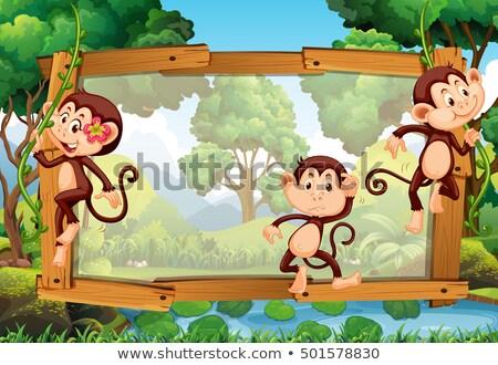 Quadro projeto três macacos mata ilustração Foto stock © colematt