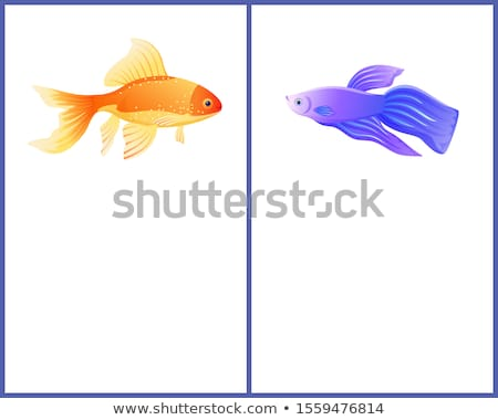 Aquarium Gold Fish and Betta Fish View on Banner Stock photo © robuart
