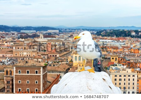 Seagull by the Vittoriano monument in Rome Stock photo © boggy