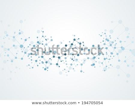 vektor · molekulák · terv · kapcsolat · neuronok · orvosi - stock fotó © designleo