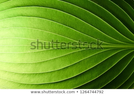 'Environment' highlighted in green stock photo © ivelin