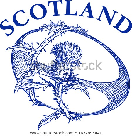 Schotland tekening hand illustratie bloem Stockfoto © patrimonio