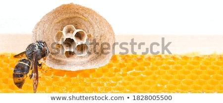 hornet's nest Stock photo © 26kot
