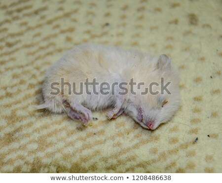Furry Mutant Rat Stock photo © AlienCat