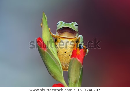 Happy Frog Stock photo © derocz