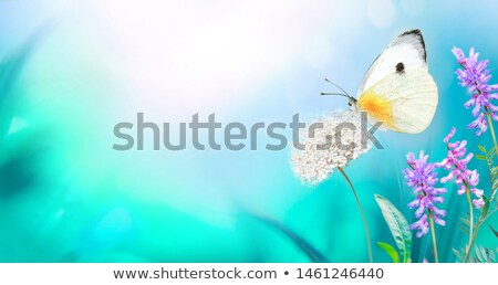 Turquoise Bug Stock photo © derocz