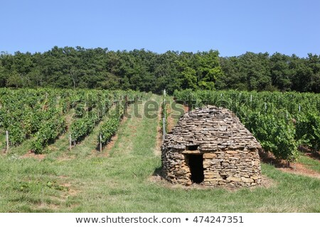 Vina empinado mal vino región alimentos Foto stock © franky242
