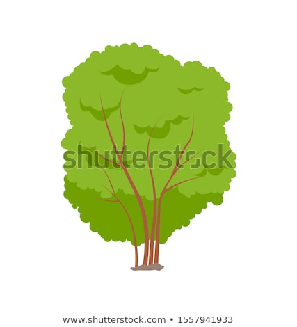 bushy tree stock photo © hraska