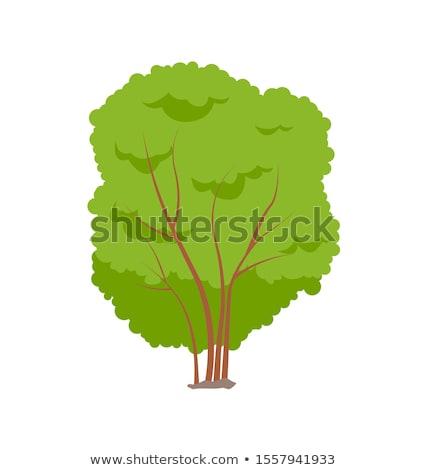 Drzewo bezlistny jesienią drzew stałego łące Zdjęcia stock © hraska