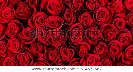 Steeg achtergrond Rood witte rozen groene Stockfoto © maxmitzu