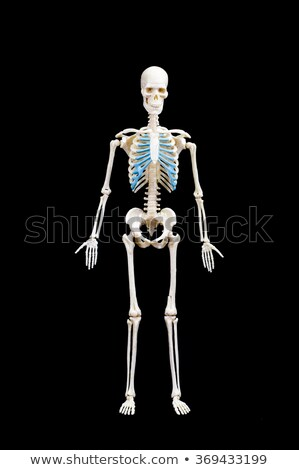 Grim reaper standing full body Stock photo © patrimonio