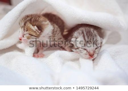 Foto stock: Recém-nascido · gatinhos · gatinho · branco · cor · gato