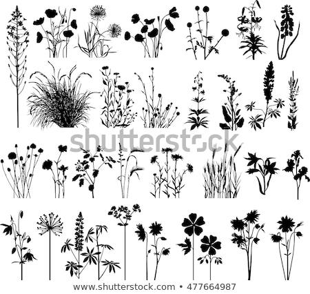 Eco Friendly Violet Vector Icon Design Stock photo © rizwanali3d