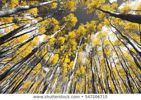 Najaar landschap groot Geel boom berg Stockfoto © Taiga