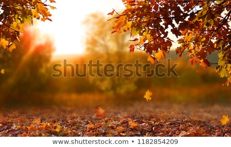 autumn fall tree with orange leaves stock photo © jaffarali