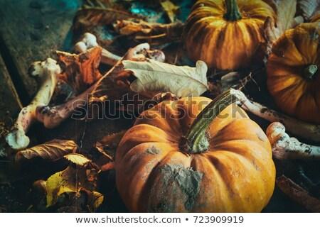 Spooky pumpkins jack o lantern among dried leaves on wooden fence Stock photo © dla4