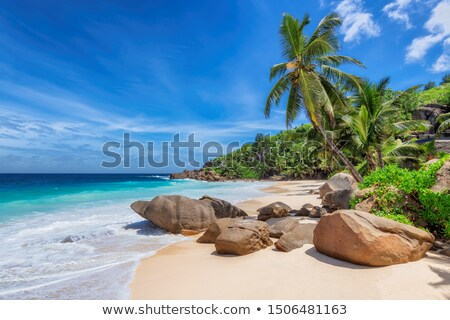 Stockfoto: Steen · caribbean · strand · wal · turkoois · zee