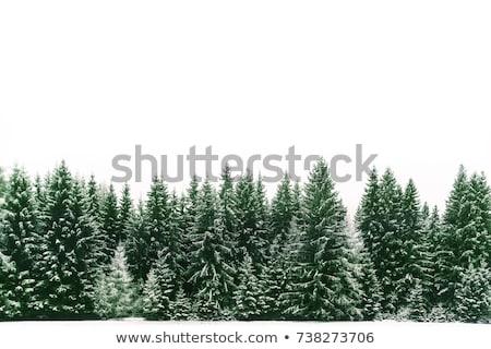 floresta · nevasca · árvores · neve · fundo · inverno - foto stock © kotenko