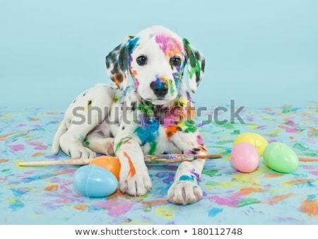 csoport · díszállatok · díszállat · fehér · kutya · macska - stock fotó © lightsource