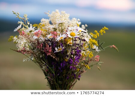 romantic girl with wild flowers stock photo © anna_om