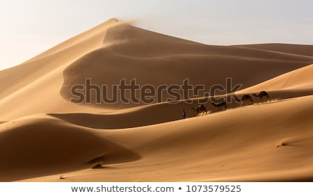 camel shadows on sahara desert sand in morocco stock photo © johnnychaos