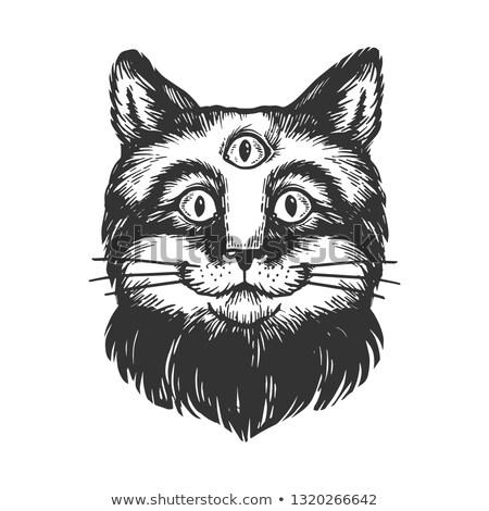 Cat clipart immagine natura design cool Foto d'archivio © vectorworks51