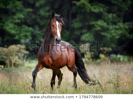 White horse работает зеленый области трава лошади Сток-фото © njnightsky
