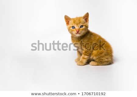 Kitty On White Stock photo © cosma