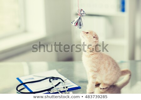 close up of kitten playing with bow at vet clinic stock photo © dolgachov