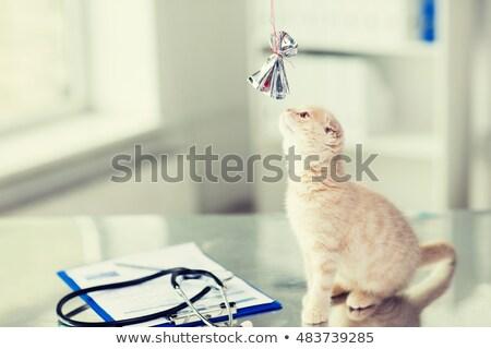 Foto stock: Gatinho · jogar · arco · veterinário · clínica