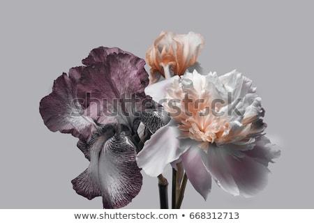 virágmintás · tapéta · csodálatos · végtelenített · virágok · háttér - stock fotó © sarts