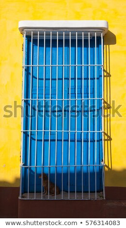 Dog guarding on the stairs of a yellow house inTrinidad, Cuba Stock photo © CaptureLight