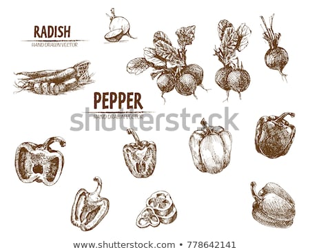 Digital Vector Detailed Line Art Radish Foto stock © FrimuFilms