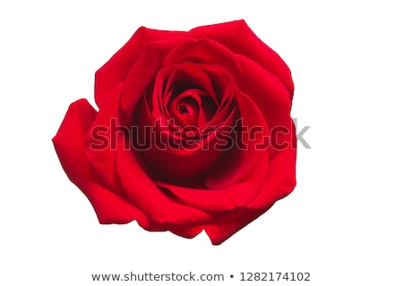 abstract rose flower and red heart shape greeting card text for valentines day stock photo © orensila