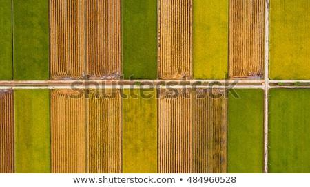 luchtfoto · vogels · oog · agrarisch · velden - stockfoto © galitskaya