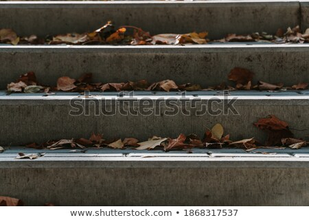 dry leaves on an outdoor stairway Stock photo © nito