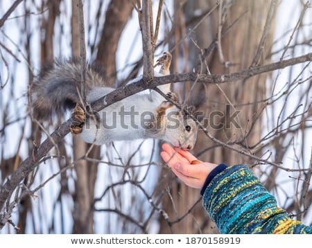 Boy and little squirrel in the park Stock photo © galitskaya