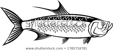 Atlantic Tarpon Megalops Atlanticus or Silver King Side View Retro Black and White Stock photo © patrimonio