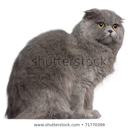 肖像 · 猫 · 緑 · ソファ · 自然 · 髪 - ストックフォト © papa1266