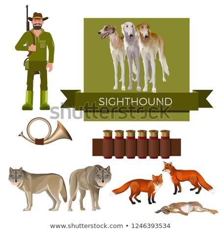 Russian Wolfhound Borzoi Fox Hunting Dog Stock photo © Qingwa