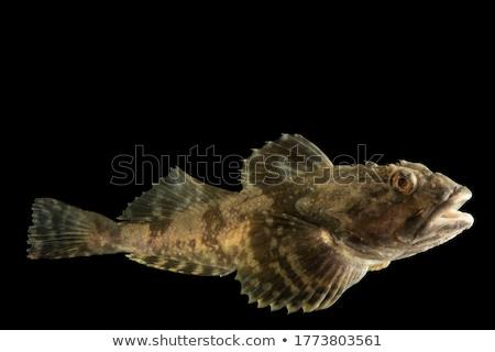 海 · 階 · 水 · 魚 · 美 · 海 - ストックフォト © Laracca