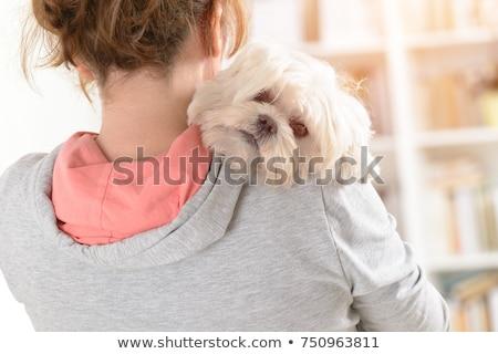 Cute white Maltese dog Stock photo © olgaru79
