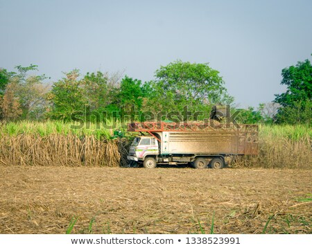 harvesting machine in action stock photo © ozgur