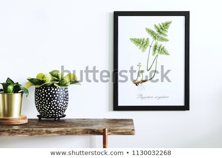 Retro picture frame on green wall stock photo © obradart