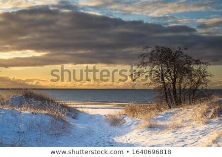Neve nuvens céu floresta paisagem Foto stock © smuki