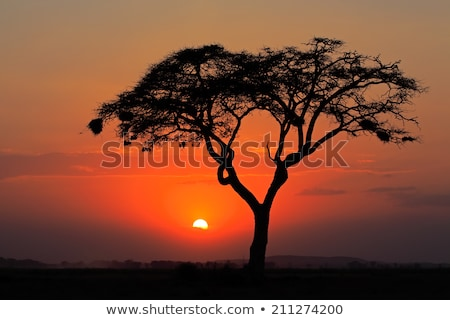 Siluetas rama puesta de sol brillo sol naturaleza Foto stock © shihina