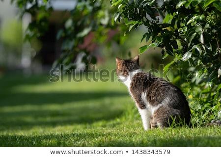 красивой кошки сидят дерево закат Сток-фото © dariazu