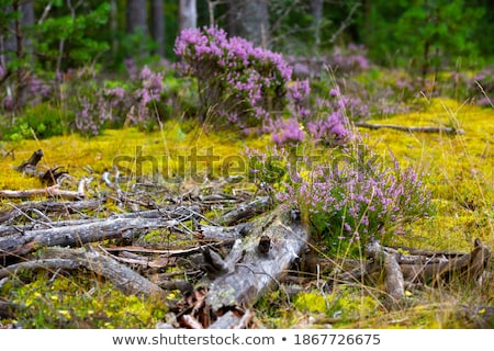 the nordic spring stock photo © t3rmiit