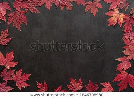 autumn foliage concrete blackboard stock photo © limbi007